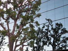 Green Technology and IT Profits